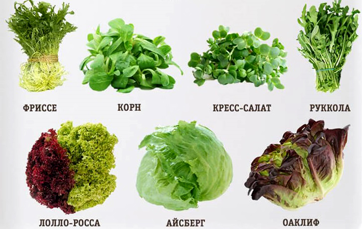 content_salaty_1__econet_ru